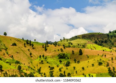 Amazing and picturesque colored mountain agriculture with corn and rice growing, green natural patchwork, Nan Province in Thailand