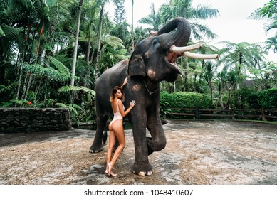 Amazing portrait of young woman hugging elephant near forest. Beautiful girl model with fit body posing in white swimsuit. Concept of zoo, tropical photoshoot