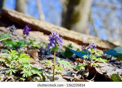 Amazing purple flower in macro in sunny grass in forest. Beautiful wallapaper.
