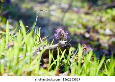 Amazing purple flower in macro in sunny grass. Beautiful wallapaper.