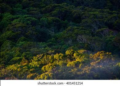 Amazing rainforest Sinharaja in Sri Lanka, Asia