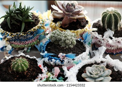 Amazing recycled product from nylon bag, good idea recycle by cut and knit nylon yarn into basket as pot to plant succulent