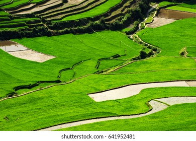 Amazing Rice fields on terraced in rainny seasont at TU LE Valley, Vietnam.Tu Le is a small valley but has beautiful terraces all year round. An attractive tourist destination 250km form Hanoi.