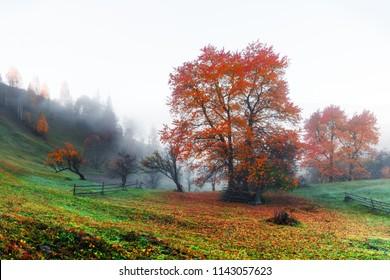 Amazing rural scene on autumn valley. Small mountain village in fantastic morning sunlight. Carpathians, Ukraine, Europe. . Landscape photography