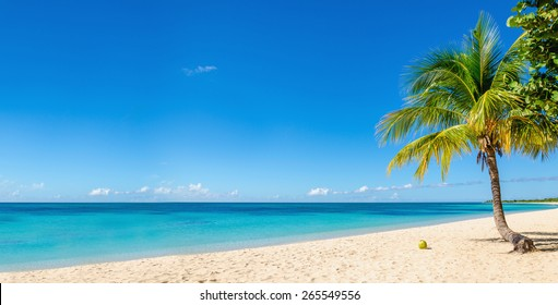 Amazing Sandy Beach With Coconut Palm Tree And Blue Sky Cuba Caribbean Islands