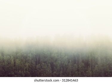 Amazing scenery on a cold and foggy morning. A forest is filled with mist. Image has a vintage effect applied.