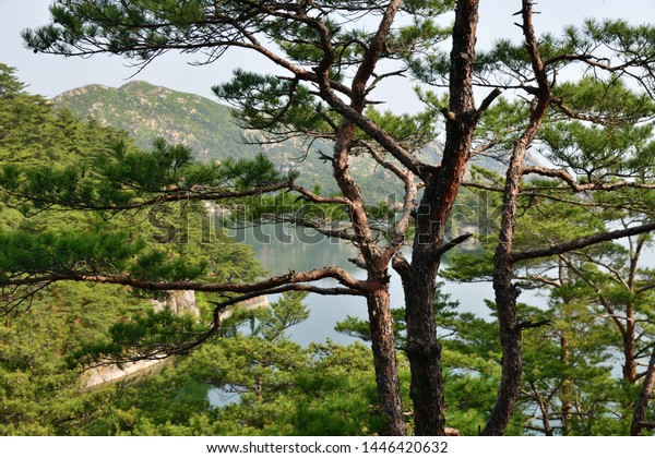 Amazing scenery of Samilpo lake. Korean red pine tree on foreground. It is one of North Korea designated Natural Monuments