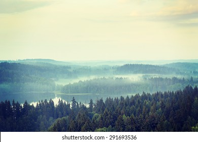 An amazing scenery of thick forest in Finland. Image taken in the summer time. Image has a vintage effect.
