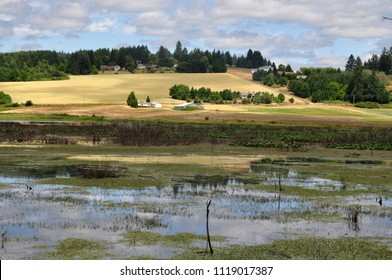 Amazing scenery of wheat farm and agricultural area surrounded by pine and cedar trees reflection in a wetland or lake in spring near Tillamook, Oregon, USA, Nice View over marsh lake and wetlands