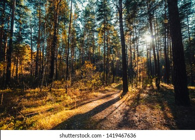 Amazing scenic landscape at early morning in autumn forest. Dazzling bright sunlight through tree branches silhouettes. Rich fall foliage glitter in sunbeams. Wonderful sunrise. Lovely sunset scenery.