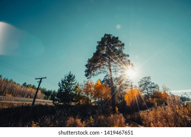Amazing scenic landscape at early morning in autumn forest. Dazzling bright sunlight through needles of high pine tree. Rich fall foliage glitter in sunbeams. Wonderful sunrise. Lovely sunset scenery.