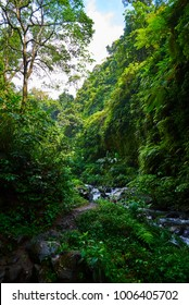 Amazing scenic view of a tropical forest with a river on a background of green trees in the morning sun. Mountain rainforest wate stream with fast flowing water and big stones. Travel concept.