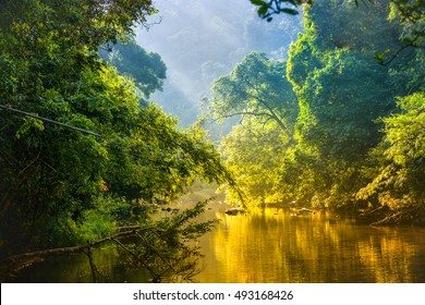 Amazing scenic view Tropical forest with jungle river on background green trees in the morning rays of the sun