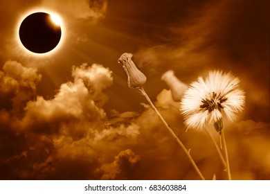 Amazing scientific natural phenomenon. Prominence and internal sun's corona. Total solar eclipse with diamond ring effect glowing on orange sky with clouds and flower, serenity nature background.