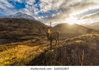 Amazing Scottish Highlands with curious deer in foreground. Snow covered peaks and rising sun across a beautiful valley.