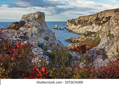 Amazing sea landscape with red cotinus Crimea, Ukraine