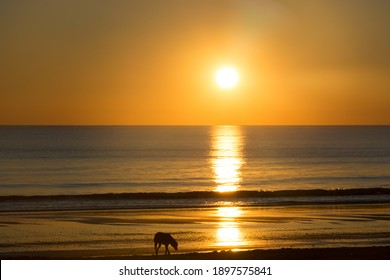 An amazing shot of a calm blue sea on orange sunset background