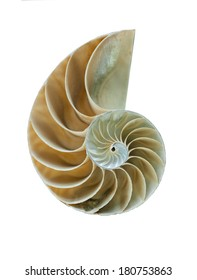 Amazing spiral fossilized Nautilus shell