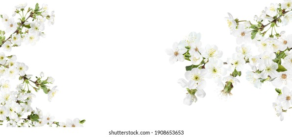 Amazing spring blossom. Tree branches with beautiful flowers on white background, banner design - Shutterstock ID 1908653653