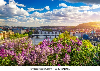 Amazing spring cityscape, Vltava river and old city center with colorful lilac blooming in Letna park, Prague, Czechia. Blooming bush of lilac against Vltava river and Charles bridge, Prague, Czechia. - Shutterstock ID 1387901051
