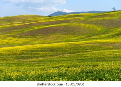 Amazing spring colorful landscape. Beautiful farmland rural landscape, cypress trees and colorful spring flowers in Tuscany, Italy. Beautiful spring landscape with blooming raps field.