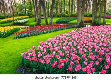 Amazing spring landscape, spectacular Keukenhof garden with colorful fresh tulips, flowers and lake in background, Netherlands, Europe