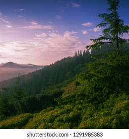 amazing summer mountains landscape,  scenic morning scene with trees on the hill on background far mountains, incredible nature dawn vertical colorful image
