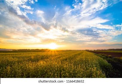 Amazing summer sunset over farmlands in the black dirt region of Pine Island, New York