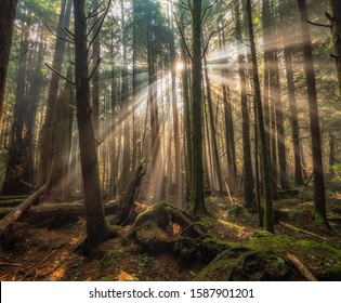 Amazing sunbeams through trees in the forest in Green Point Campground on Long Beach in Tofino, British Columbia, Canada.
