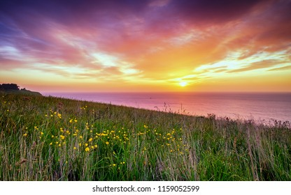 Amazing sunrise in New Zealand. It was early morning, the sun creates beautiful vibrant colors in the sky. One can see ocean horizon and tall grass with yellow follows. It is a breathtaking view.