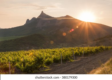 Amazing sunrise over the vineyards and mountains.