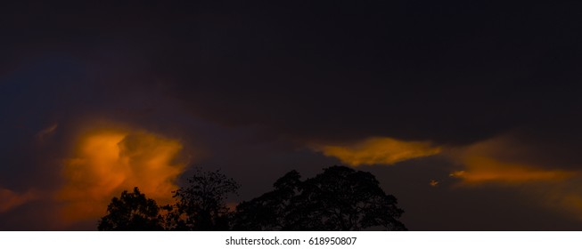 Amazing sunset bombing sky behind the big tree