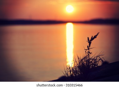An amazing sunset by the sea. Image taken in Finland during summer evening. Image has a vintage effect applied. Some grass is acting as a silhouette in the right hand side. Plenty of room for text.