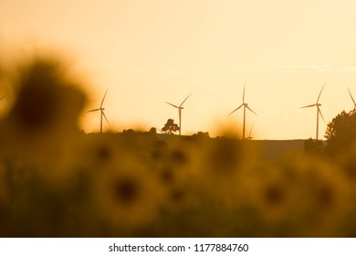 Amazing sunset in field of sunflowers and wind turbine working, windmill ecological power by day