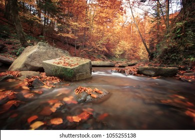 amazing sunset landscape, river in gold sunlight in autumn beech forest, stunning colorful scenery ,big stones near fast stream, Carpathian mountains, Ukraine, wallpaper European image