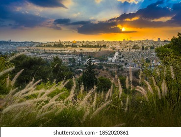Amazing sunset over Jerusalem: view of Kidron Valley from the southern neighbourhoods to the Old City and Temple Mount; view from the Mount of Olives, with beautiful grassy foreground