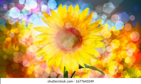 Amazing sunset over sunflowers field with bokeh background