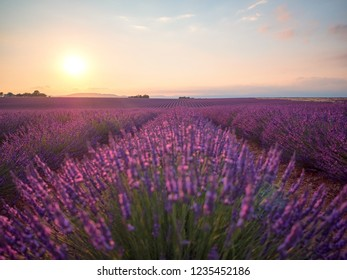 Amazing sunset over violet lavender field in Provence, France