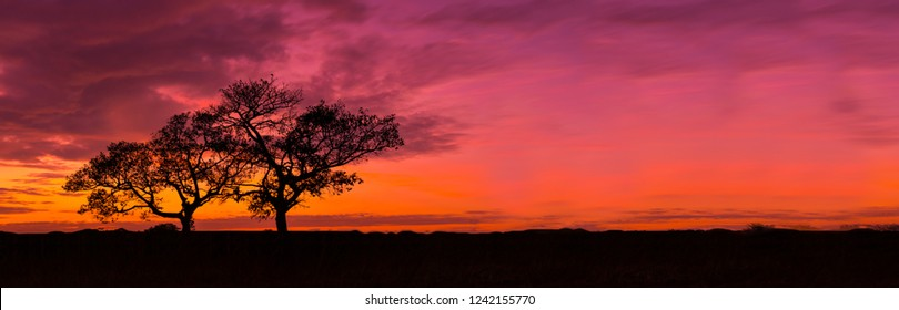 Amazing sunset and sunrise.Panorama silhouette tree in africa with sunset.Tree silhouetted against a setting sun.Dark tree on open field dramatic sunrise.Safari theme.