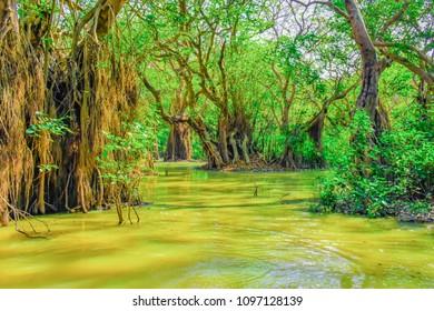 Amazing swamp foret Ratar gool, Sylhet, Bangladesh.