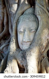 Amazing Thailand, Buddha head that appeared in the tree roots.