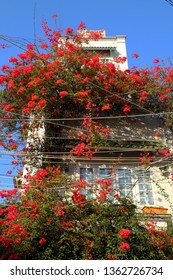 Amazing townhouse at Ho chi Minh city, Vietnam, beautiful bougainvillea flower climb on wall and bloom vibrant in red, home facade decor by red flower trellis