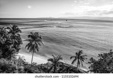 Amazing tropical landscape. Black-white photo.