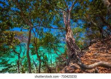 Amazing tropical trees on the Tup Island. AO Nang, Krabi, Thailand.
