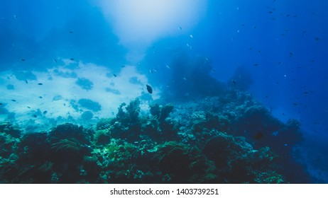 Amazing underwater photo of sandy sea bottom with growing colorful coral reefs and swimming fishes