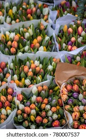An amazing variety of multi-colored tulips. Photo has a warm spring atmosphere.