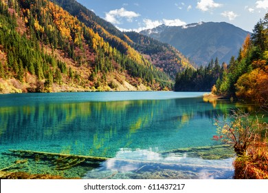 Amazing view of the Arrow Bamboo Lake with azure water among mountains and colorful fall woods in Jiuzhaigou nature reserve (Jiuzhai Valley National Park), China. Submerged tree trunks at the bottom.