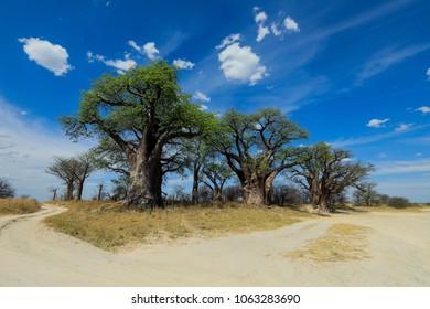 Amazing view to the Baobab Island, Desert, Botswana