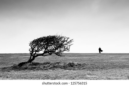 Amazing view with bend tree and silhouette of man on horizon