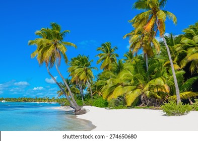 Amazing view of Caribbean beach with white sand and beautiful exotic palm trees, Dominican Republic, Caribbean Islands
